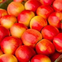 Зберагіння яблук Ужгород